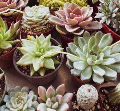 Plantes Purifiantes Maison Sans Entretien