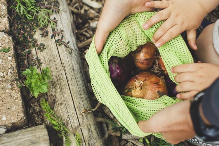 Légumes à L année Autonomie