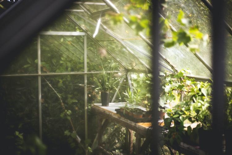 Irrigation Pour Serre