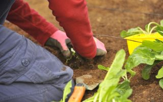 Semer Des Légumes En Hiver