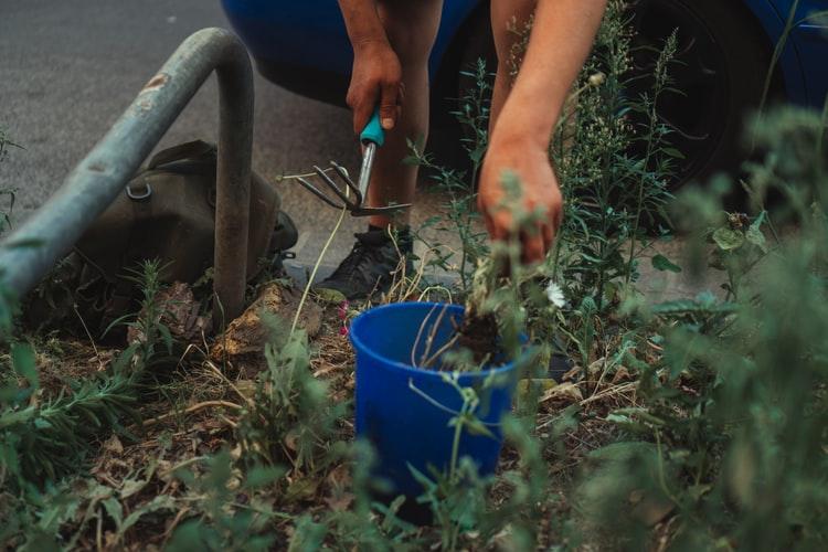 Planter En Conteneur